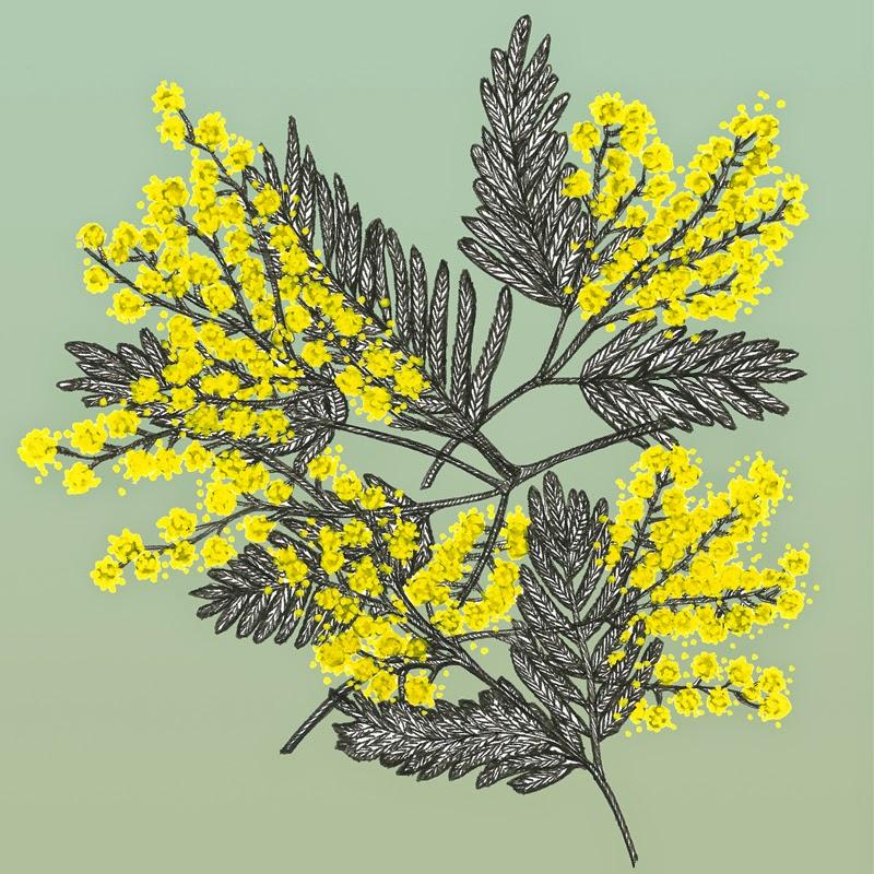 mimosa-blog